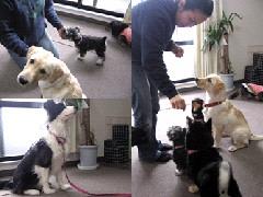 株式会社 BASE Dog Training School (さいたま市見沼区) (犬の幼稚園・保育園・ しつけ/アジリティー)