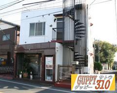 グッピーサトウ -GUPPY310- (さいたま市 見沼区) 国産グッピー専門店