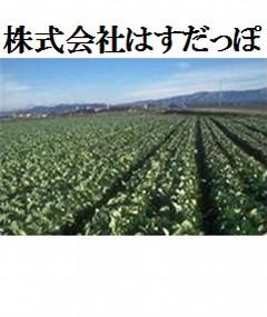 株式会社はすだっぽ(蓮田市)農作物栽培、販売