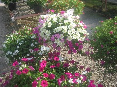 有限会社 ハイフラワー (さいたま市浦和区) 花屋